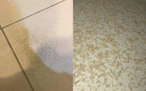 耀際報導白蟻糞便