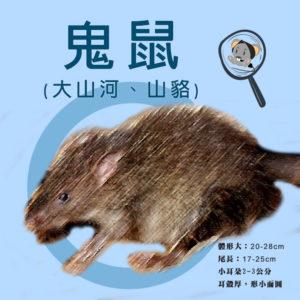 耀際說鬼鼠