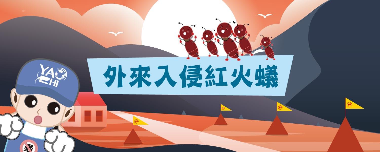 紅火蟻防治插圖01紅火蟻BNweb2