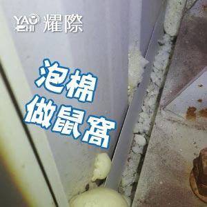 工廠有老鼠該如何處理02工廠老鼠的危害-老鼠窩web