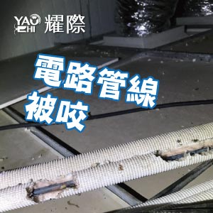 工廠有老鼠該如何處理02工廠老鼠的危害-鼠咬web