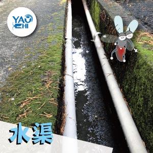 冬天蚊子要如何消滅01水渠