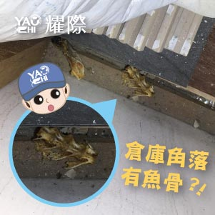 台中滅鼠專業團隊01餐廳倉庫有老鼠覓食痕跡