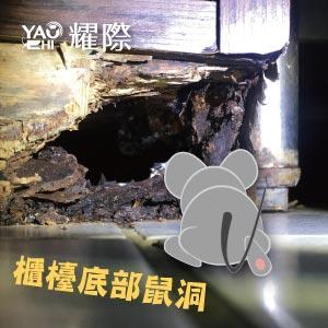 台中滅鼠專業團隊01餐廳櫃檯鼠洞老鼠防治
