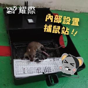台中滅鼠專業團隊02工廠內部捕鼠