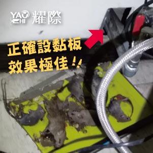 台中滅鼠專業團隊02工廠內部滅鼠效果極佳