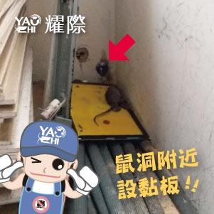 台中滅鼠專業團隊02工廠捕鼠用黏鼠板