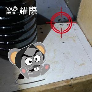 如何判斷家裡有老鼠02櫃子裡有鼠便