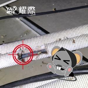 如何判斷家裡有老鼠02管線包材有鼠咬痕