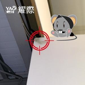 如何判斷家裡有老鼠02髒髒的是老鼠傑作