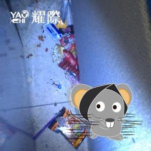 如何判斷家裡有老鼠04老鼠藏食物發臭