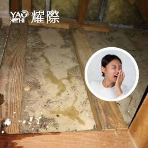 如何判斷家裡有老鼠04鼠尿臭味
