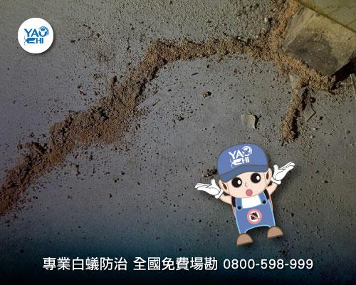 地上一條詭異土堆