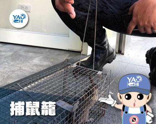 家裡有老鼠:鼠害的危害進程01捕鼠籠