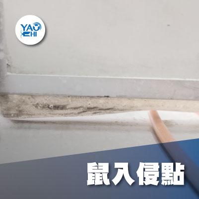 家裡有老鼠:鼠害的危害進程02老鼠入侵洞
