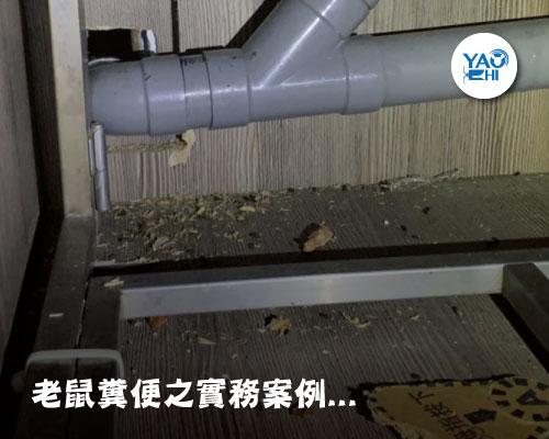家裡有老鼠:鼠害的判斷與分析01原來這就是老鼠大便