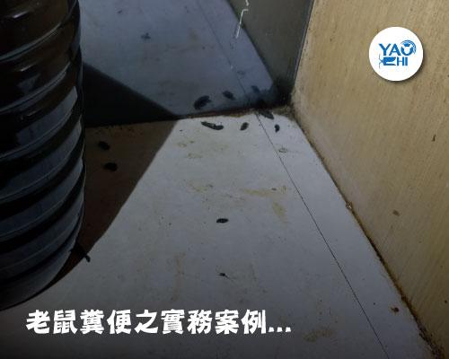 家裡有老鼠:鼠害的判斷與分析01鼠便長怎樣