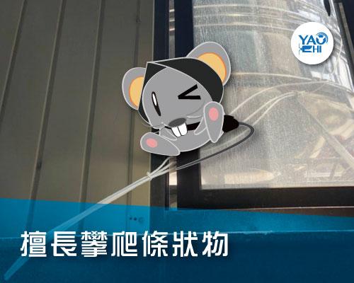 家裡有老鼠:鼠害的判斷與分析03屋頂鼠活動場域