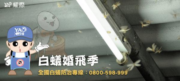 台中西屯白蟻防治-插圖-01